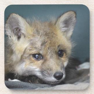 Porta Copos Capa de telefone do Fox