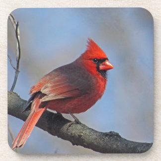 Porta-copos Cardinal