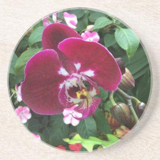 Porta copos da orquídea de Singapore