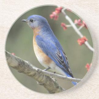 Porta-copos De Arenito Bluebird