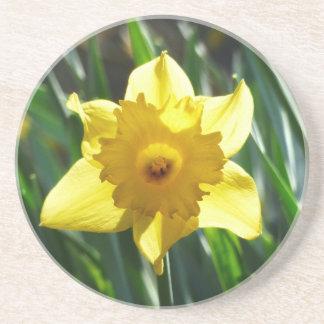 Porta-copos De Arenito Daffodil amarelo 02.2_rd