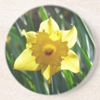 Porta-copos De Arenito Daffodil amarelo 03.0.g