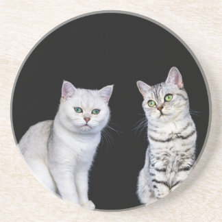 Porta-copos De Arenito Dois gatos britânicos do cabelo curto no fundo