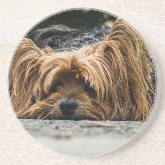 Porta-copos De Arenito Filhote de cachorro bonito de Yorkshire