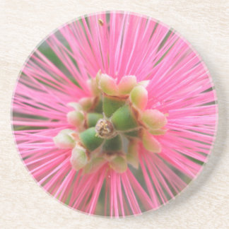 Porta-copos De Arenito Flor cor-de-rosa da árvore de goma