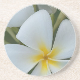 Porta-copos De Arenito Flor tropical branca do Plumeria de Fiji