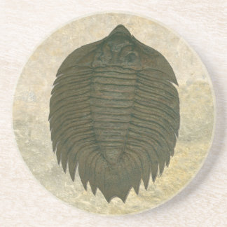Porta-copos De Arenito Fóssil Trilobite de Arctinrus Boltoni