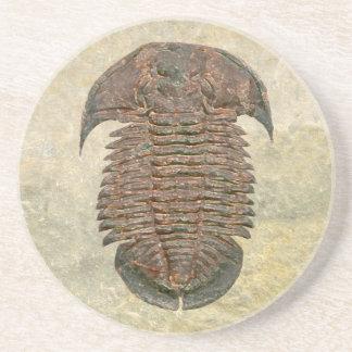 Porta-copos De Arenito Fóssil Trilobite de Yuepingia