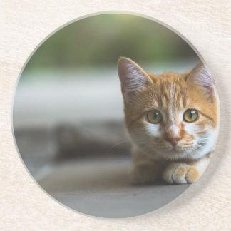 Porta-copos De Arenito Gatinho alaranjado do gato malhado