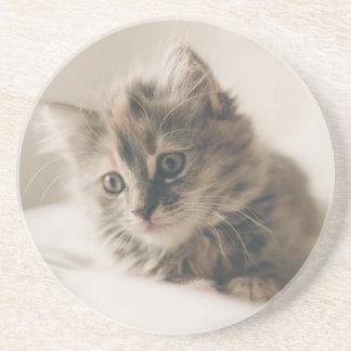 Porta-copos De Arenito Gatinho cinzento do gato malhado