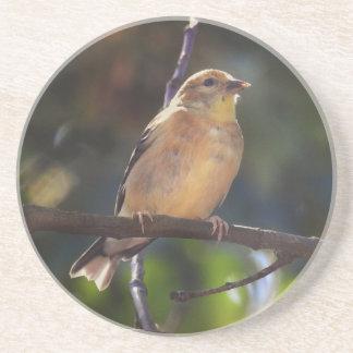 Porta-copos De Arenito Goldfinch americano fêmea