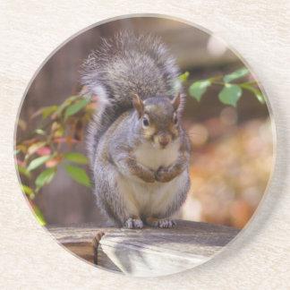 Porta-copos De Arenito Implorando o esquilo
