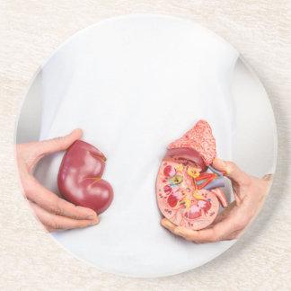 Porta-copos De Arenito Mãos que guardaram o modelo do órgão humano do rim