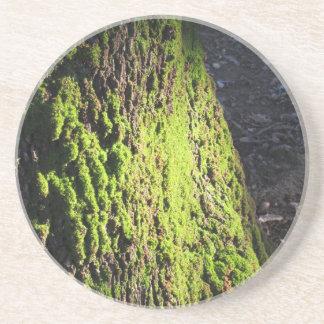 Porta-copos De Arenito O musgo verde no detalhe da natureza de musgo