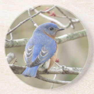 Porta-copos De Arenito Parte traseira do Bluebird