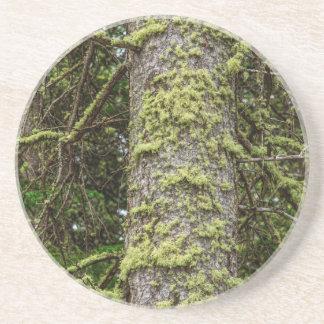 Porta-copos De Arenito Pine_Tree_Moss