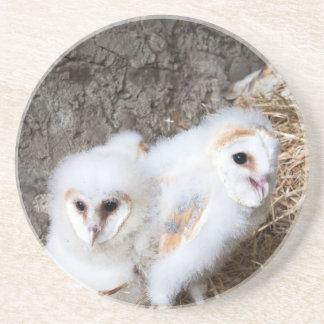 Porta-copos De Arenito Pintinhos da coruja de celeiro em um ninho