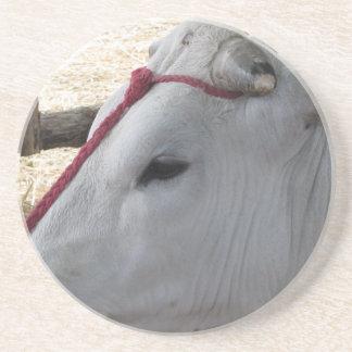 Porta-copos De Arenito Retrato do Chianina, raça italiana do gado