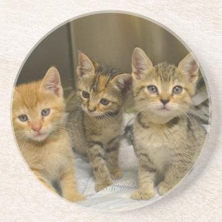 Porta-copos De Arenito Três gatinhos