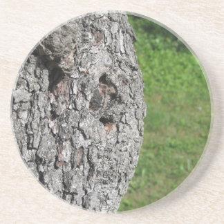 Porta-copos De Arenito Tronco de árvore da pera contra o fundo verde