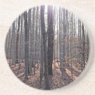 Porta-copos De Arenito Uma floresta da faia na queda
