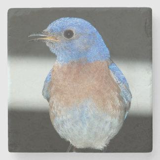 Porta Copos De Pedra Bluebird ocidental