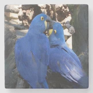 Porta copos de pedra de mármore dos papagaios