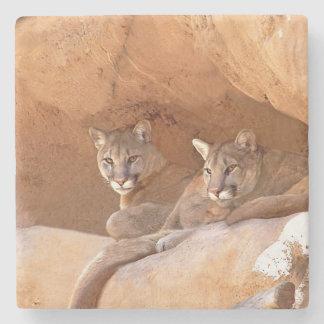 Porta Copos De Pedra Dois leões de montanha
