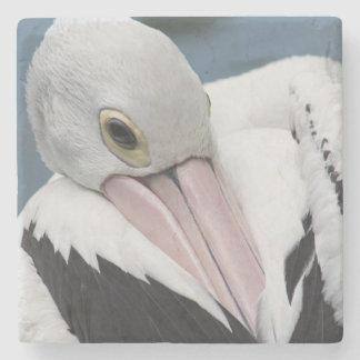 Porta Copos De Pedra Fim australiano do pelicano acima