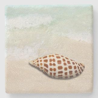 Porta Copos De Pedra Seashell de Junonia nas portas copos da praia