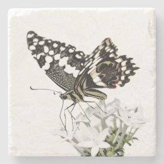 Porta Copos De Pedra Swallowtail empoleirou-se no branco
