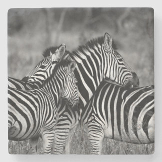 Porta Copos De Pedra Zebras