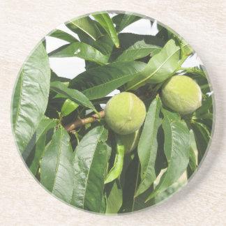 Porta-copos Dois pêssegos verdes unripe que penduram em uma
