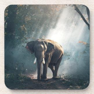 Porta Copos Elefante asiático em um esclarecimento Sunlit da