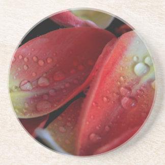 Porta-copos Embers da tulipa