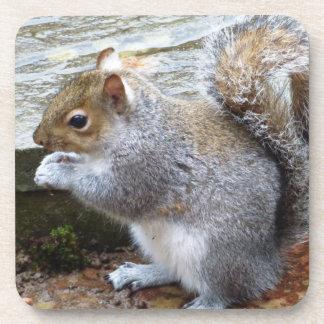 Porta Copos Esquilo cinzento selvagem bonito