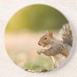 Porta-copos Esquilo com fome