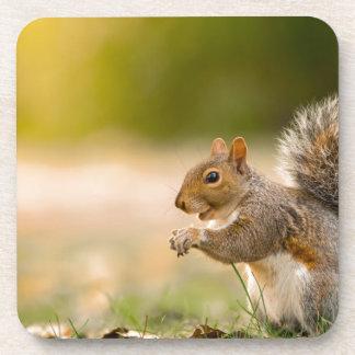 Porta Copos Esquilo com fome