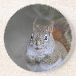 Porta-copos Esquilo vermelho