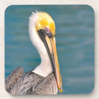 Porta-copos Fim do retrato do pelicano acima com o oceano no