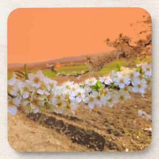 Porta Copos Flor branca da ameixa