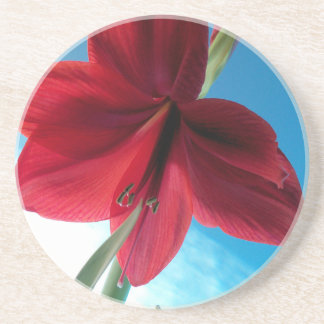 Porta-copos flor vermelha vívida do Amaryllis 108a