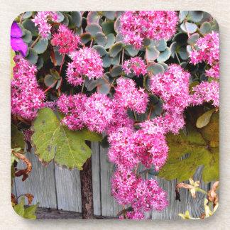 Porta Copos Flores cor-de-rosa do Stonecrop do penhasco