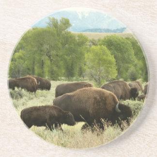 Porta-copos Fotografia do animal da natureza do bisonte de