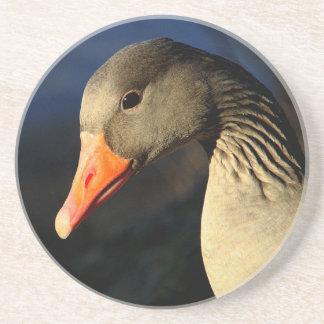 Porta-copos Ganso de pato bravo europeu bonito