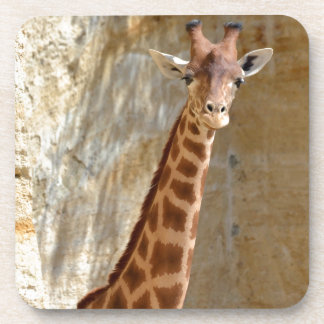 Porta Copos Girafa perto do penhasco