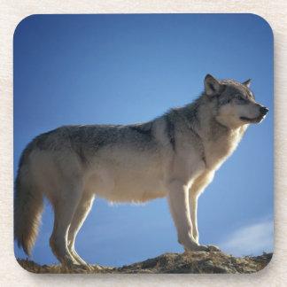 Porta-copos Lobo em rochas