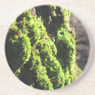 Porta-copos O musgo verde no detalhe da natureza de musgo