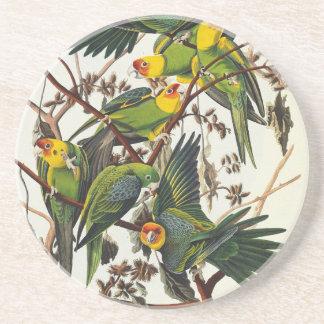 Porta-copos Papagaio de Carolina - John James Audubon
