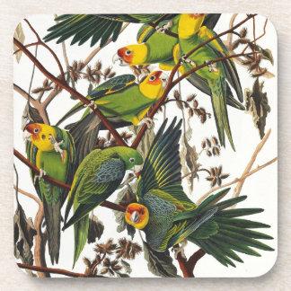 Porta Copos Papagaio de Carolina - John James Audubon